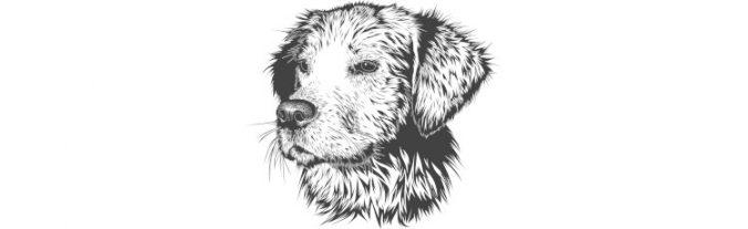 crônica cão soldado